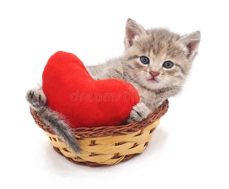 Kitten in a basket with the heart. On a white background stock images