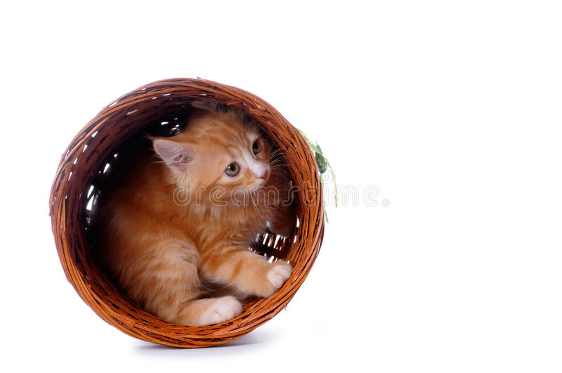 Download Kitten In A Basket Isolated On White Stock Image - Image: 10550147