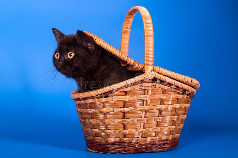 Kitten in the basket royalty free stock photography