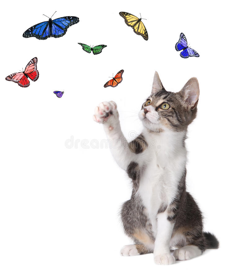 Kitten Batting at Butterflies. Playful Kitten Batting at Butterflies Flying Around royalty free stock photography