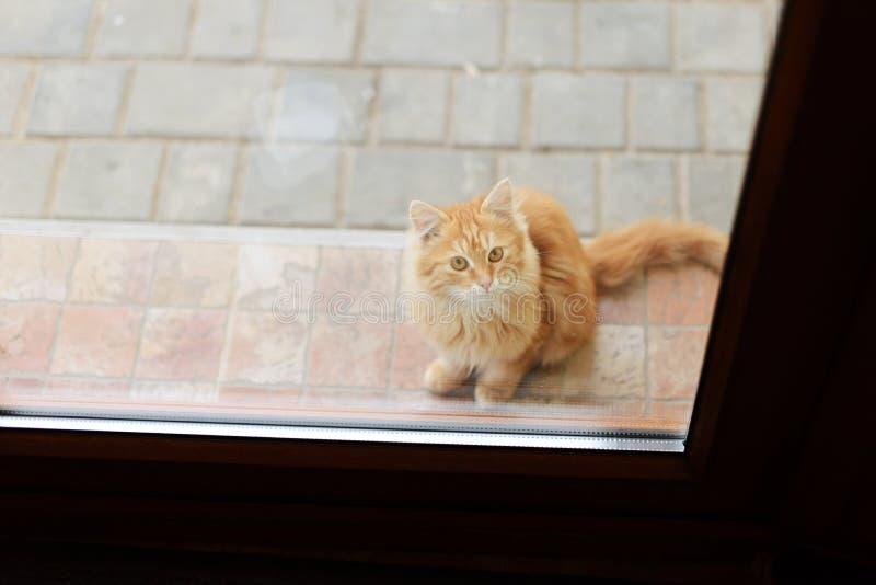 Download Kitten Behind Door stock photo. Image of domestic pedigree - 37806620 & Kitten Behind Door stock photo. Image of domestic pedigree - 37806620