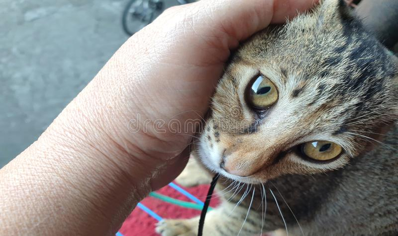 Kitten being pet by non visible master. A kitten obviously enjoying being pet by non visible master royalty free stock photos