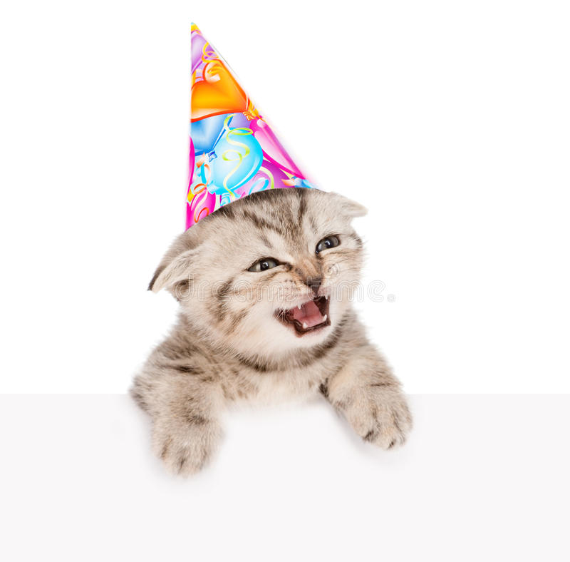 Kitten in birthday hat looking out because of the poster. isolated on white. Background stock images