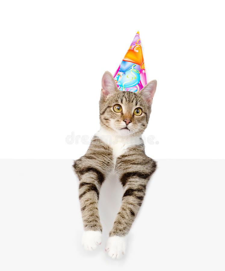 Kitten in birthday hat looking out because of the poster. isolated on white. Background stock image