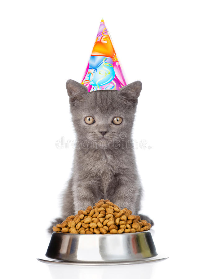 Kitten in birthday hat sitting near a bowl of food. isolated on. White background royalty free stock images