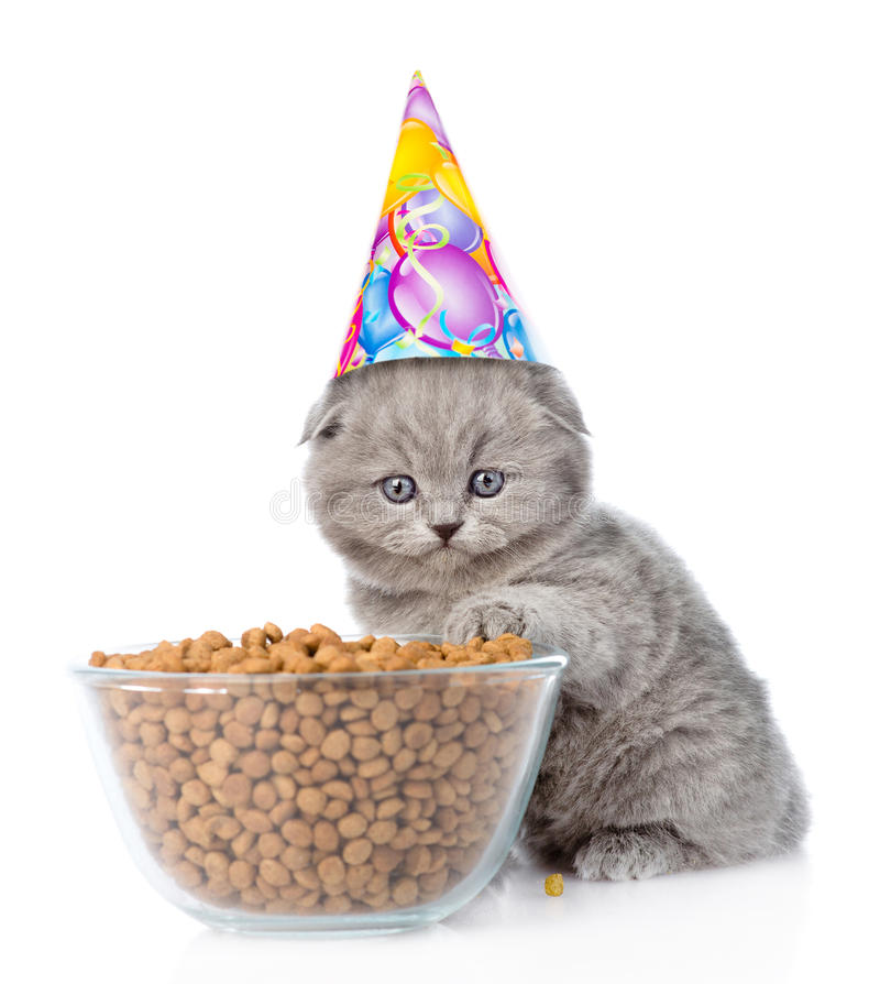 Kitten in birthday hat sitting near a bowl of food. on white. Background stock photography