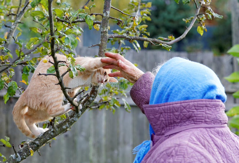 The kitten bites a hand of the woman stock photo