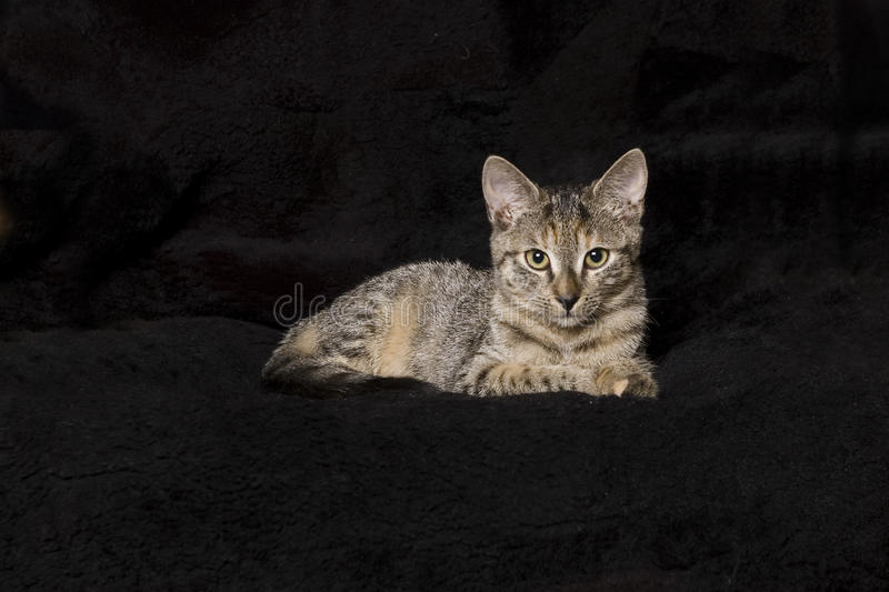 Download Kitten on black stock image. Image of home, background - 22538397