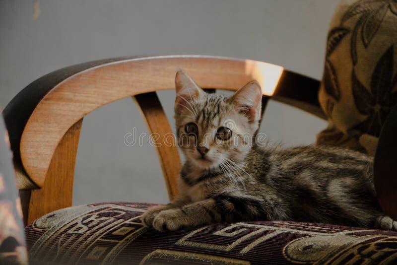 Kitten& bonito x27; olho de s imagens de stock