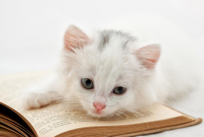 Kitten on book stock photography