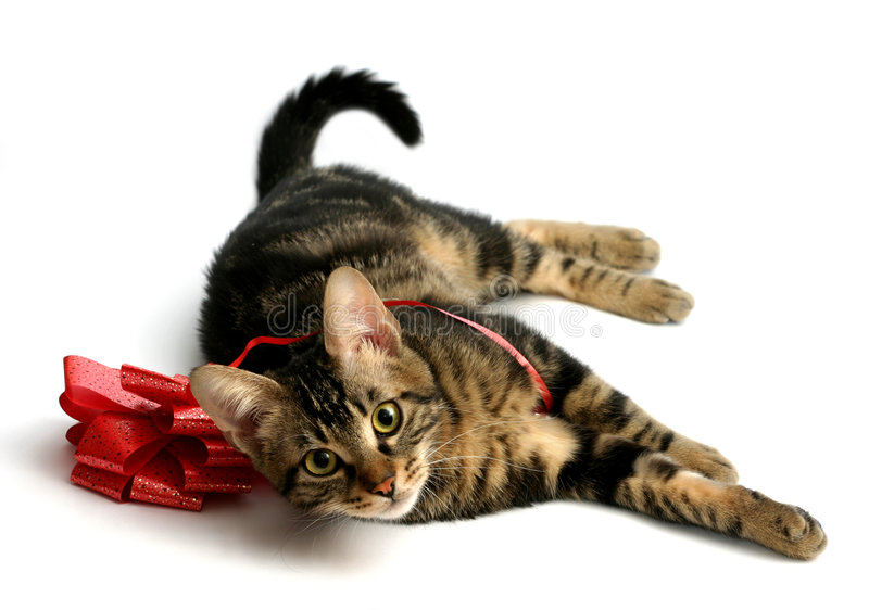 Kitten With Bow stock photography