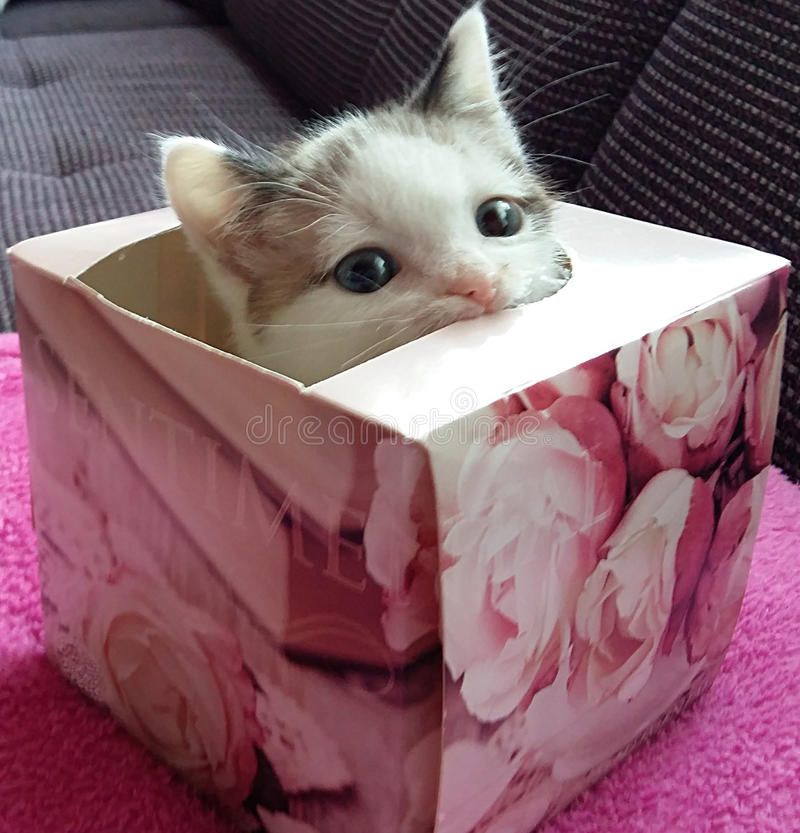 Download KITTEN IN THE BOX stock image. Image of color, happy - 82486585
