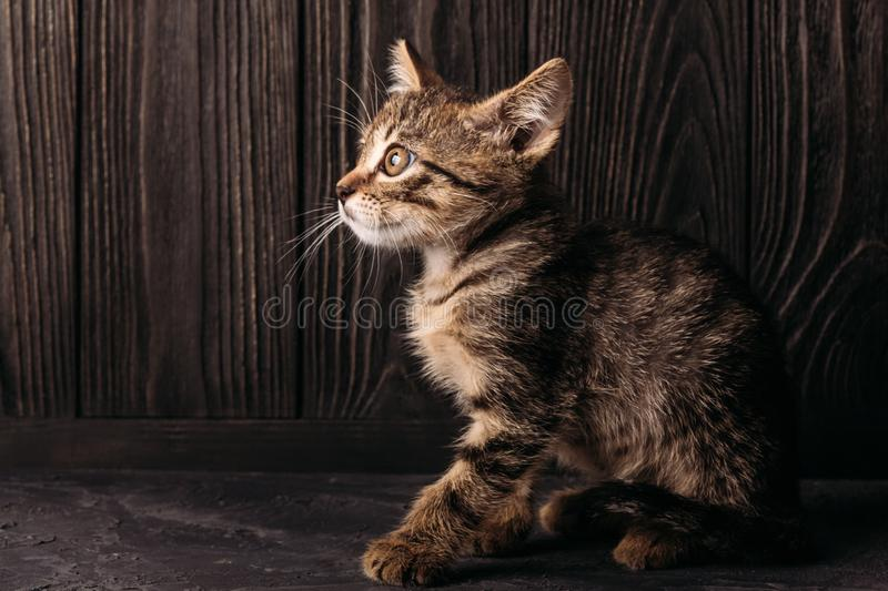 A lonely brown kitten sits on a dark background. A kitten of brown color sits on a concrete surface on a dark wooden background royalty free stock images