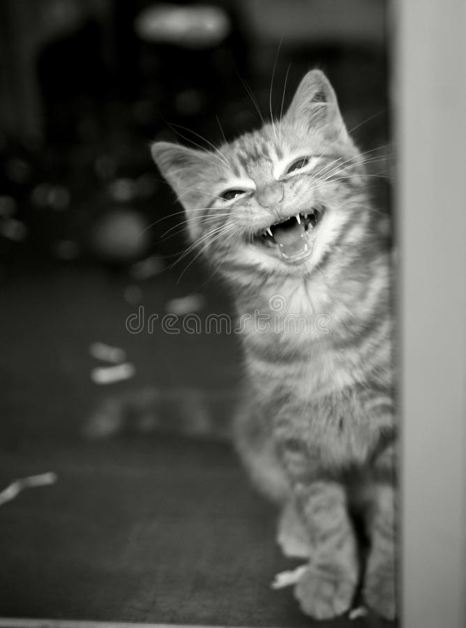 Kitten in a cage crying royalty free stock photography