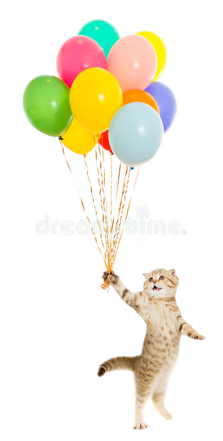 Kitten or cat with colorful balloons isolated royalty free stock photo
