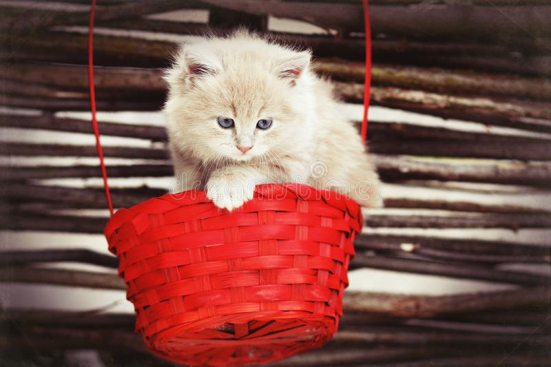 Red kitty in the basket stock images