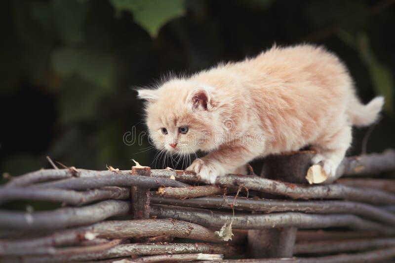 Cat on the tree stock photos