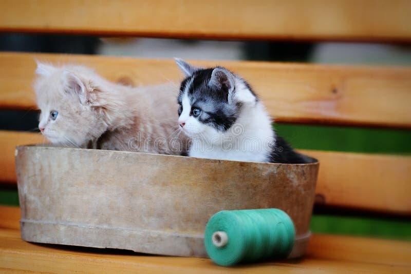 Two little kitten stock photos