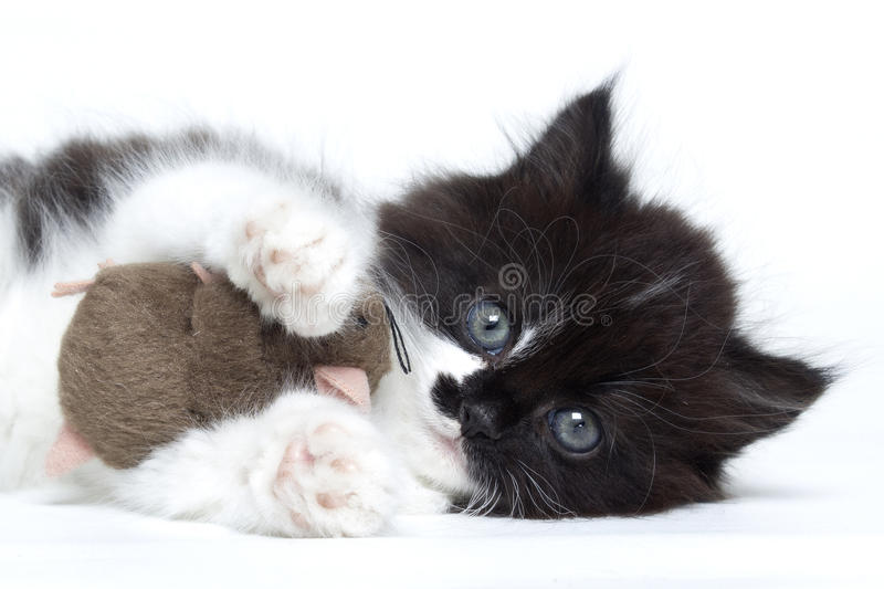 Kitten cat playing with a toy mouse royalty free stock photography