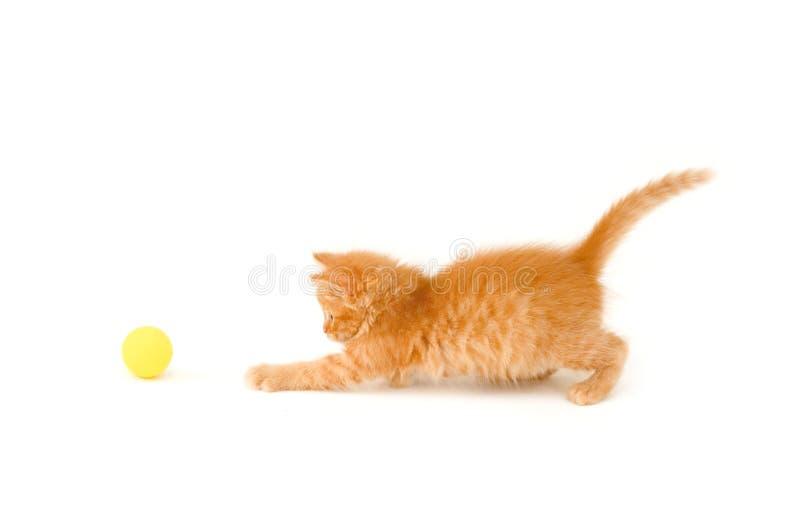 Kitten catch ball stock image