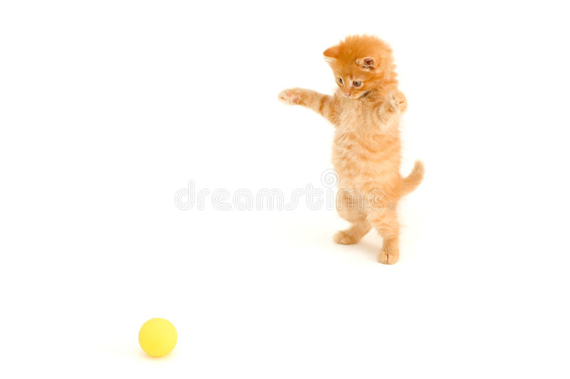 Download Kitten Catch Ball Stock Photo - Image: 14720270