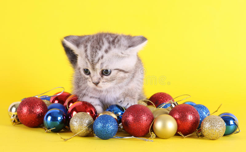 Kitten with christmas balls royalty free stock photography