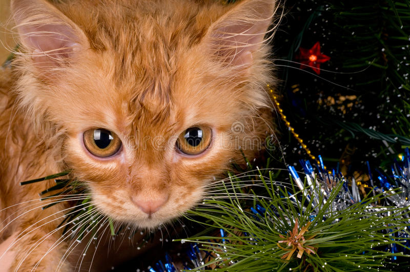 Kitten And Christmas Tree Stock Photography
