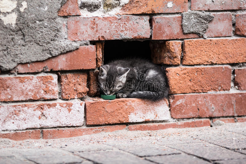 Kitten in the city royalty free stock image