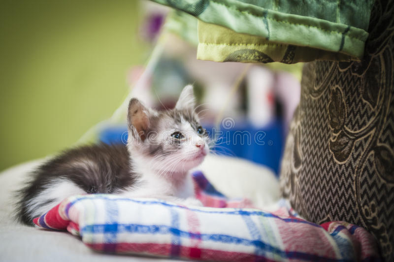 Kitten on couch stock images