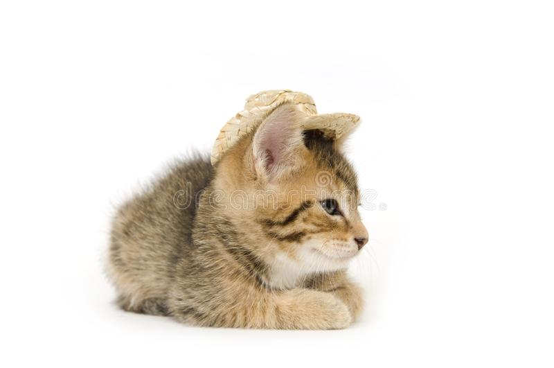 Kitten and cowboy hat royalty free stock photos
