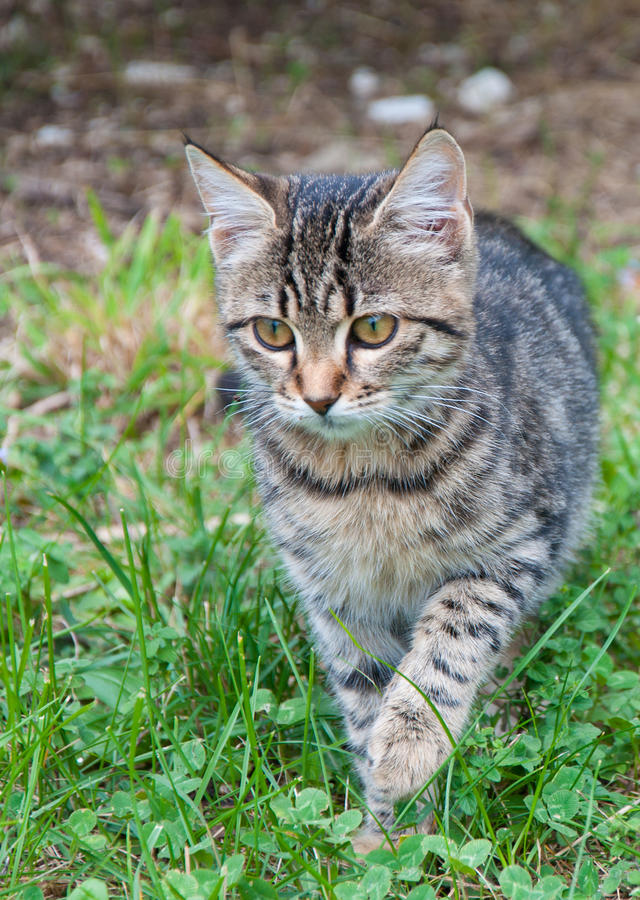 Download Kitten creeping stock image. Image of adorable, green - 19071511