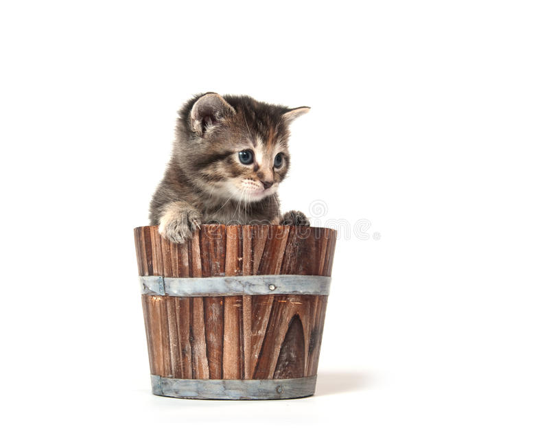Kitten crying in a barrel stock photography