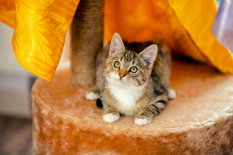 Kitten curious Age 1 month stock images
