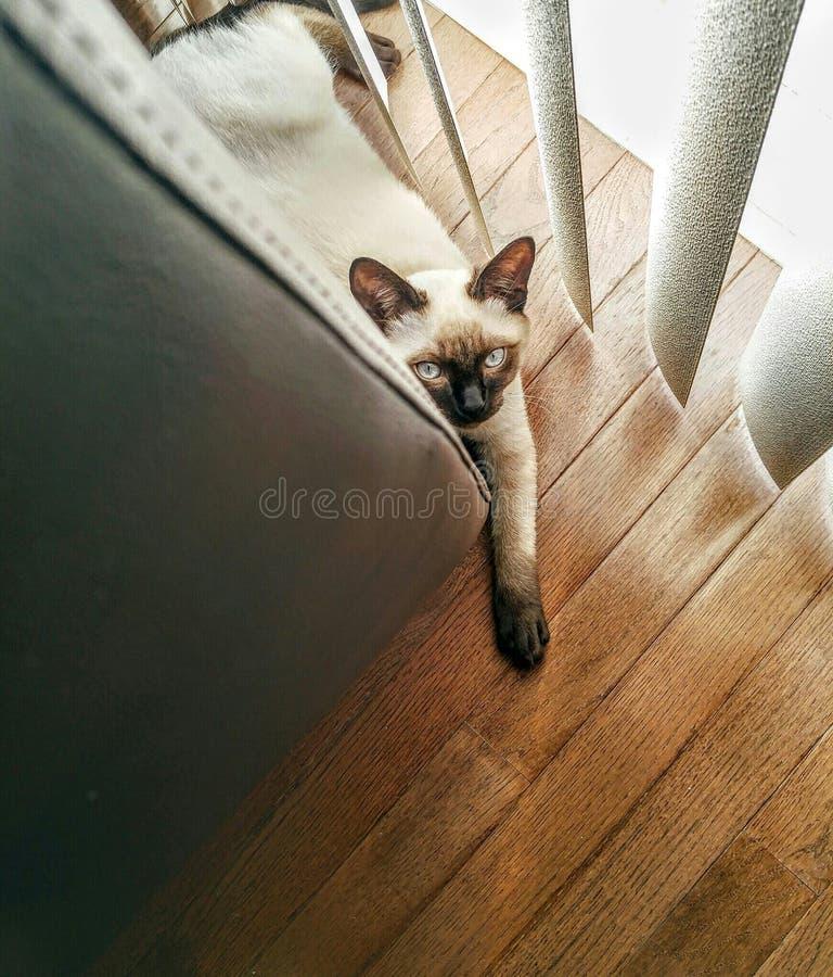 Kitten. stock image