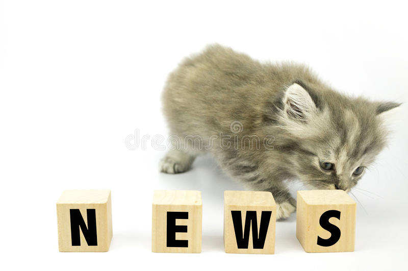 Kitten. Cute Kitten sniff at cubical block with news written on it stock image