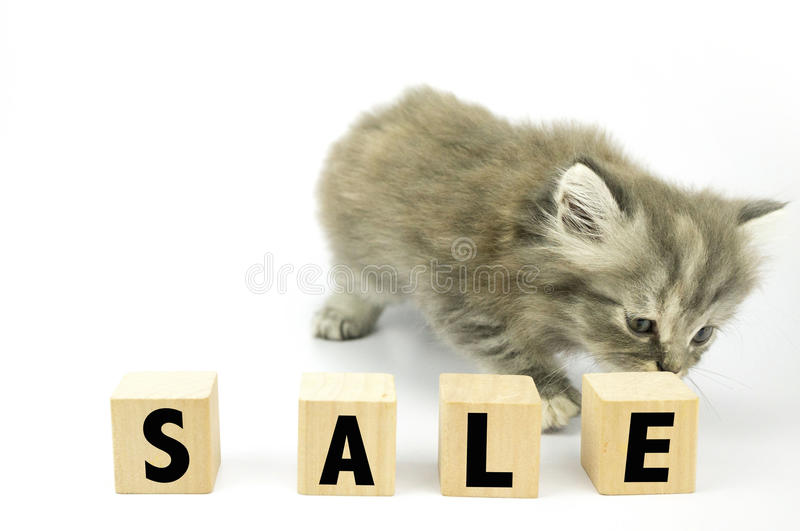 Kitten. Cute Kitten sniff at cubical block with sale written on it stock images