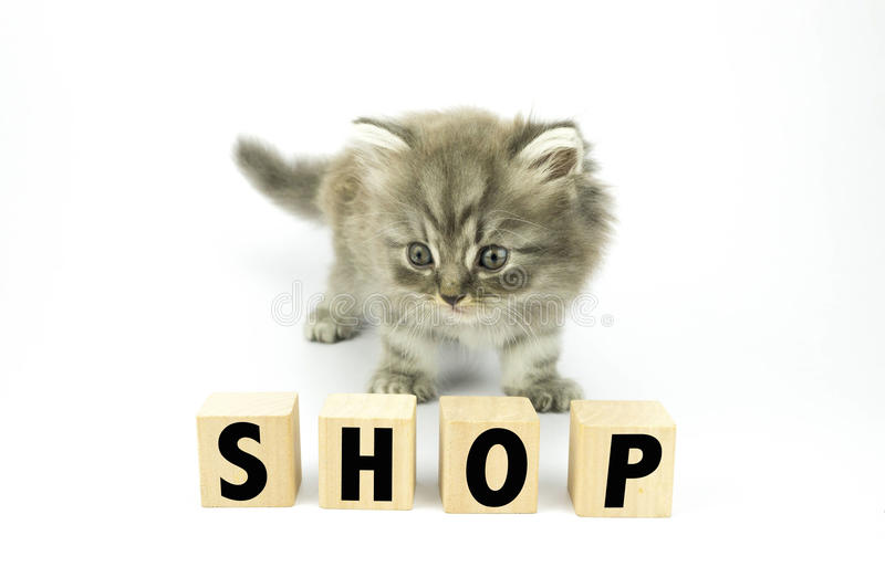 Kitten. Cute Kitten sniff at cubical block with SHOP written on it royalty free stock photography