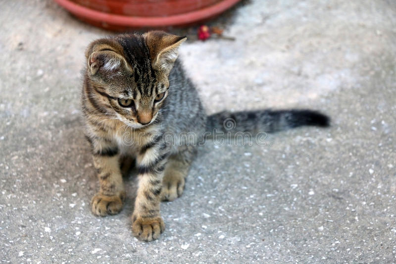 Kitten. Cute tabby kitten sitting in a yard. Selective focus stock images