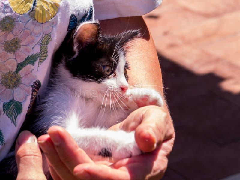 Kitten. Cute kitten in woman's hands stock images