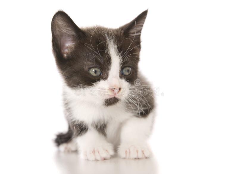 Kitten Cuteness fotos de archivo