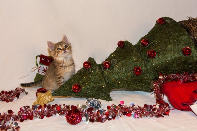 Kitten Destroys Christmas. A playful kitten knocks over the Christmas Tree royalty free stock photos