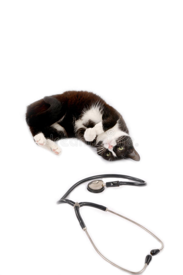 Kitten with a doctor royalty free stock image