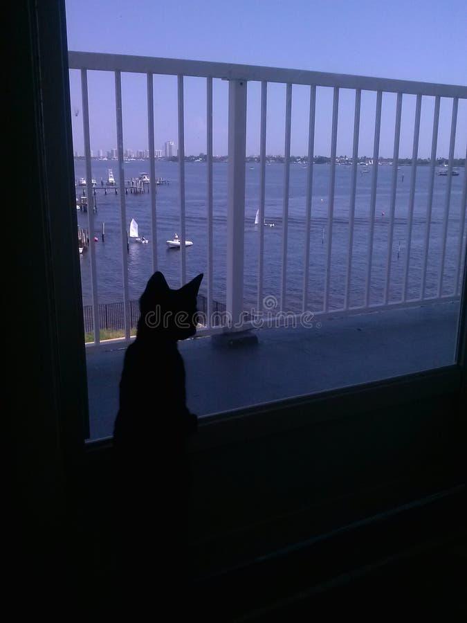Download Kitten at the Door stock photo. Image of door looking - 94460038 & Kitten at the Door stock photo. Image of door looking - 94460038