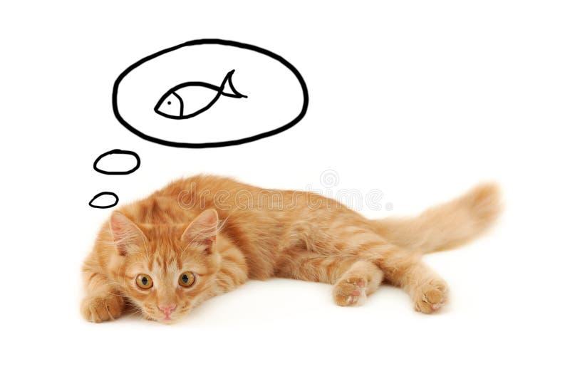 Kitten dreaming stock photo
