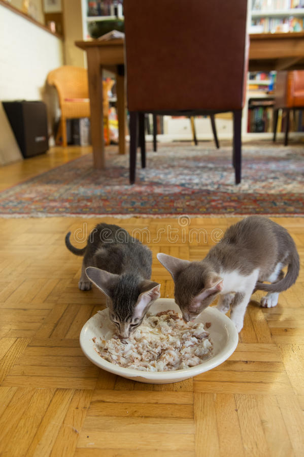 Download Kitten eating fish stock image. Image of little, wooden - 33160833