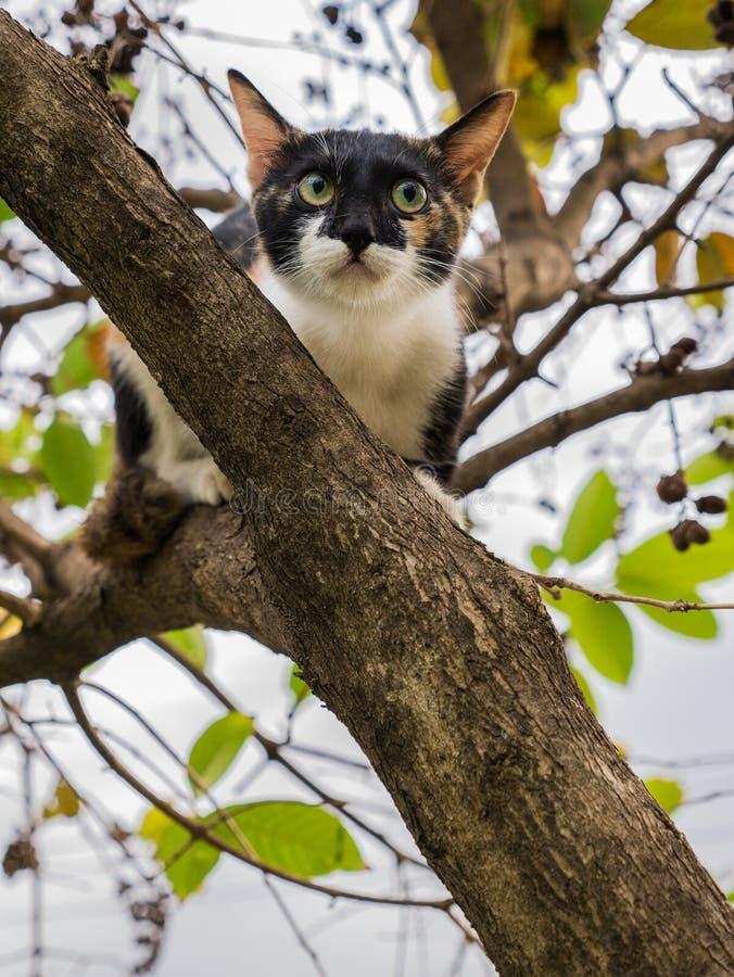 Kitten Escape Another Cat herauf den Baum stockfotos
