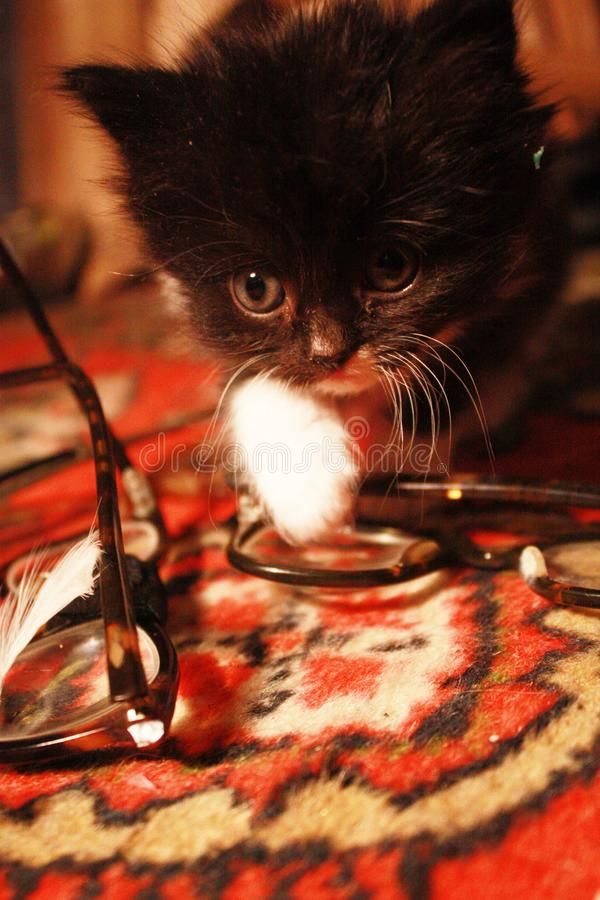 kitten at the eye doctor royalty free stock images