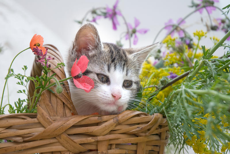 Kitten In Flower Basket Stock Image