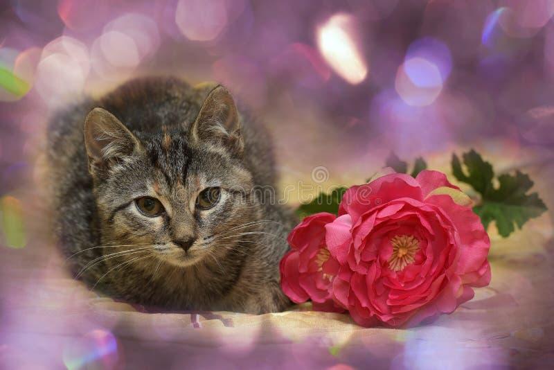 Kitten and a flower stock photo. Image of bouquet, garden - 79812276