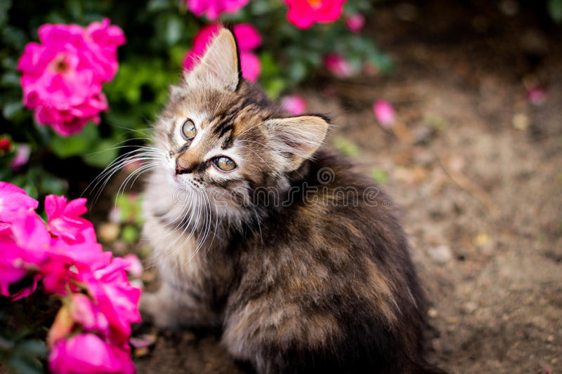 Kitten and flower royalty free stock photography